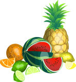 Tropical Fruit. An illustration of Some tropical fruit Stock Photo