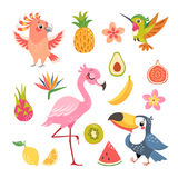 Tropical fruit and birds Royalty Free Stock Image