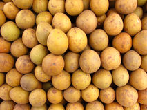 Tropical Fruit-Chikoo or Sapodilla. Pile of fresh sapota or chikoo or sapodilla fruit Royalty Free Stock Images