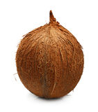 Tropical fruit coconut isolated Stock Photography