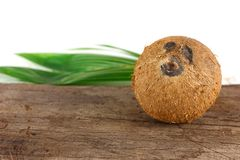 A coconut with shell. Tropical fruit - coconut with shell on wood royalty free stock photo