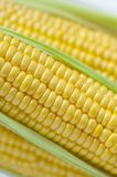 An important human staple food, maize is a highly nutritious crop, high starch as food raw materials, are miscellaneous grains, stock images