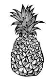 Tropical fruit pineapple. Royalty Free Stock Photo