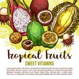 Tropical fruit poster of exotic asian berry sketch. Tropical fruit poster with feijoa, durian and rambutan, longan, passion and dragon fruit sketch. Whole and stock illustration
