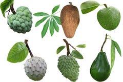 Tropical Fruit Set stock photos