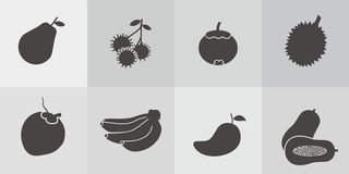Tropical Fruit Vector. Icon / Vector of tropical fruit in asia Royalty Free Stock Photography