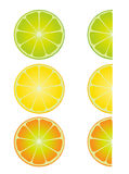 Tropical fruits. Tropical juice fruits vector illustration Royalty Free Stock Images