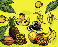 Tropical fruits. Isolated on yellow background Royalty Free Stock Photos