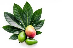 Tropical fruits background. Mango near exotic leaf on white top view copyspace Stock Image