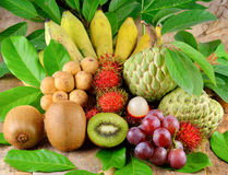 Tropical fruits collection. Stock Image