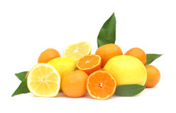 Tropical fruits grapefruit, oranges, tangerine and Royalty Free Stock Photo