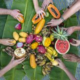 Tropical fruits assortment on a green banana leaves and people hands, close up. Yummy dessert, close up. Mango, papaya, pitahaya stock image