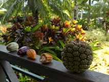 Tropical fruits in Hawaii Stock Photography