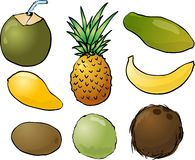 Tropical fruits illustration Stock Image