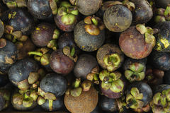 Tropical Fruits Mangosteen. Fresh organic mangosteens for sale in the market Stock Image