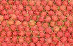 Tropical Fruits Rambutan Stock Image