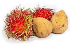 Tropical Fruits Rambutan and Lansium domesticum Royalty Free Stock Image