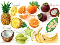 Tropical fruits set. Tropical fruit set on white background. Vector illustration Royalty Free Stock Photography