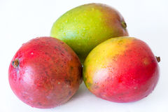 Tropical Fruits: Three Mangos White Background Not Isolated Stock Photo