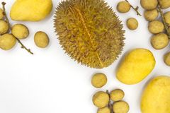 Tropical fruits on white background. Yellow Mango langsat durian flat lay banner template with text place. stock images