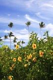 Tropical garden. In Guam Stock Photos