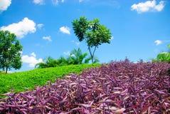 Tropical garden Royalty Free Stock Photo