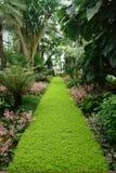 Tropical Garden. A tropical garden with a green path to a statue Royalty Free Stock Photography