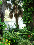 Tropical garden. With plants, trees, and flowers Royalty Free Stock Photo