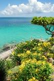 Tropical Garden. Photo of tropical garden on seashore Royalty Free Stock Photo