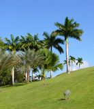 Tropical garden. With palm and coconut trees Stock Photo