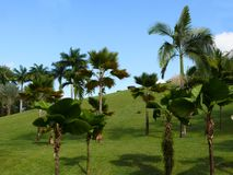 Tropical garden. With palm and coconut trees Stock Photos