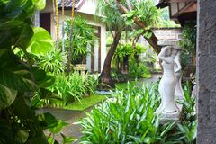 Tropical garden. In Bali island Royalty Free Stock Photos