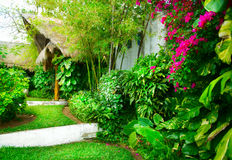 Tropical Garden Royalty Free Stock Images
