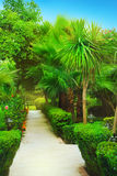 Tropical garden Stock Photography
