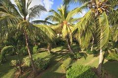 Tropical Garden. Tropical Garden in Cayo Guillermo. Cuba Royalty Free Stock Photography