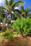 Tropical Garden. Tropical Garden in Cayo Guillermo. Cuba Stock Image