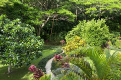 Tropical garden. A walking path around a tropical resort's lush garden grounds shows healthy, vibrant trees, shrubs and other exotic growth Royalty Free Stock Photo