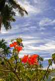 Tropical garden. In Guam with space alloted for text Royalty Free Stock Image