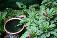 Tropical garden. With flowing water from a fountain royalty free stock images
