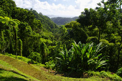 The tropical garden of Balata, Martinique Royalty Free Stock Images