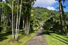 The tropical garden of Balata, Martinique Royalty Free Stock Image
