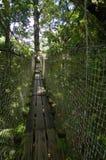 The tropical garden of Balata, Martinique Royalty Free Stock Photo