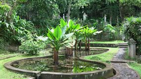 Tropical garden with banana trees and many colorful flowers. Water tank with koi carp. royalty free stock photo