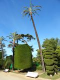 Tropical garden in Cadiz, Andalusia, Spain Royalty Free Stock Image