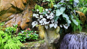 Tropical garden. With colorful plants and a small waterfall stock footage