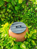 Tropical garden decoration Royalty Free Stock Image