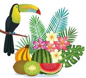 Tropical garden with fruits and toucan. Vector illustration design fruits, leaves and flowers, summer and exotic concept Stock Images