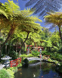 Tropical Garden in Funchal (Madeira) Stock Photo