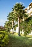 Tropical garden with green palms in a row Stock Photos