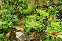 Tropical garden green plants Stock Images